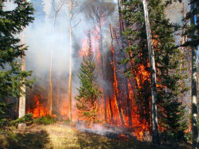 Wildfire Strikes Again in Alberta