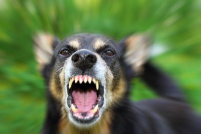 Home Insurance Coverage For When Your Dog Bites